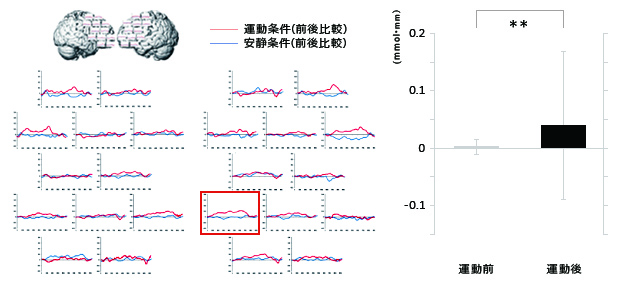 前頭前野の局所脳血流動態 グラフ 実験結果